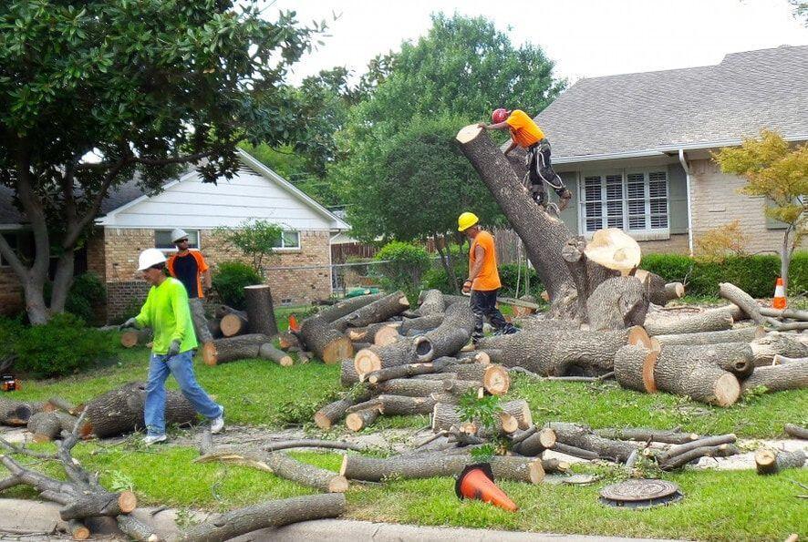 Tree Removal Service Marietta, GA